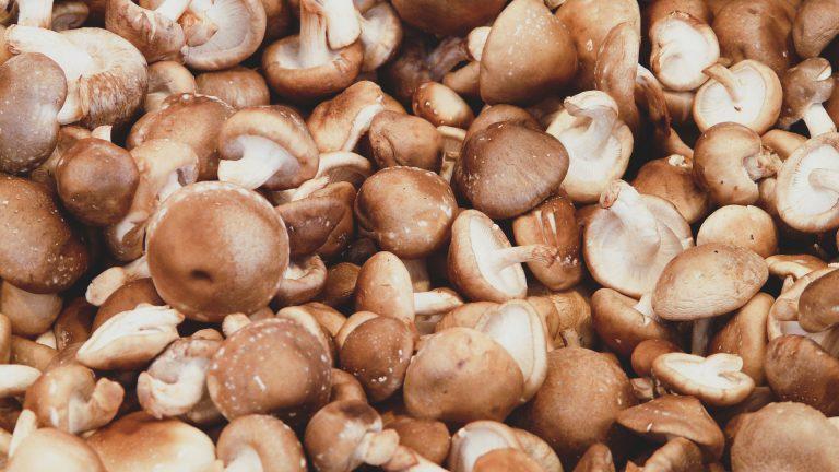 shiitake champignon van Agaricus b.v. Sevenum